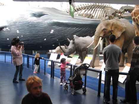 Музей естествознания Лондон