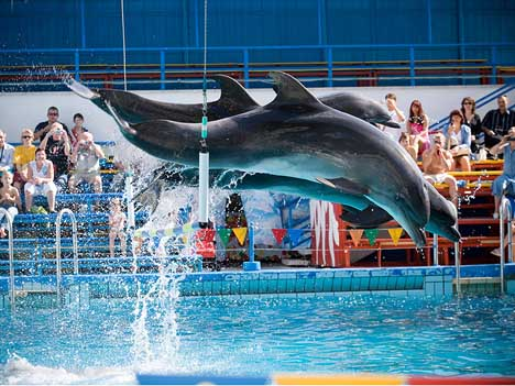 дельфинарий ялта