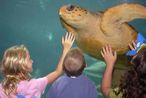 нью-йорк аквариум