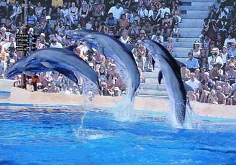 дельфины бенидорм