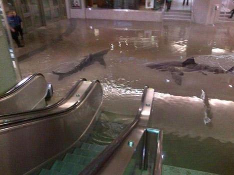 акулы в метро
