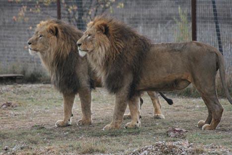фото парк львов в крыму