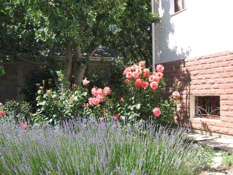 ареда частного жилья в кацивели на лето