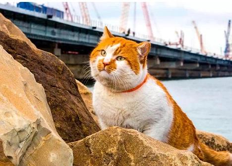 кот мостик