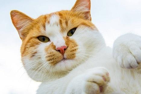 фото кота мостика