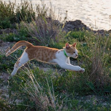 котенок мостик