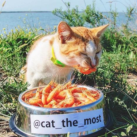 фото кот мостик