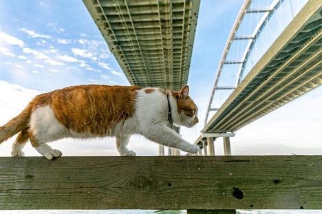 кот мостик фото