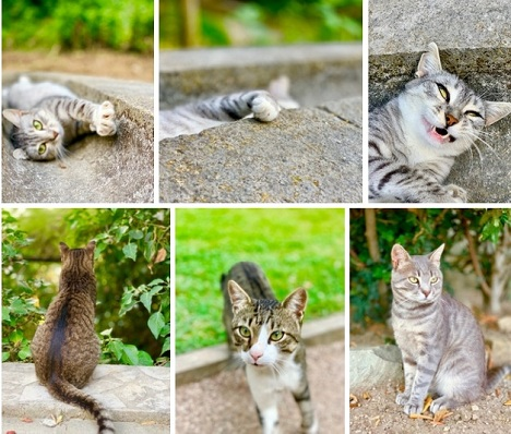 алупка котики
